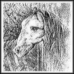 black and white pencil drawing of horse